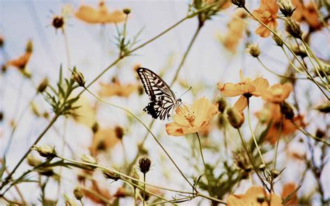 butterfly aesthetic computer wallpapers