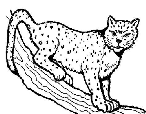 simple bobcat cliparts   clip art  clip art  clipart library