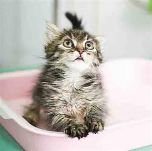 Zigarettengeruch Wohnung Entfernen : katzenbabys und kitten ~ Bigdaddyawards.com Haus und Dekorationen