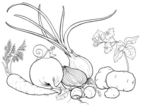 root vegetables coloring pages coloring pages