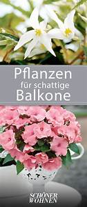 Pflanzen Für Schattige Plätze : 56 besten balkon umgestalten bilder auf pinterest ~ Orissabook.com Haus und Dekorationen