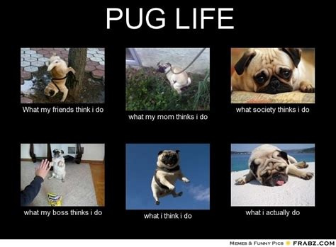 True Life Meme Generator - pug meme pug life meme generator what i do pugs pinterest