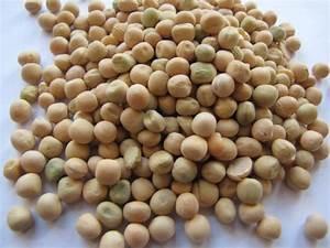 Pea seeds | Feedipedia
