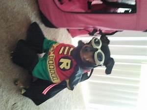 batmans robin dog halloween costume