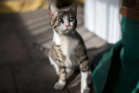 Street Cats in Israel