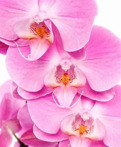 Orchideen Umtopfen Video : orchidee pflege 123zimmerpflanzen ~ Watch28wear.com Haus und Dekorationen