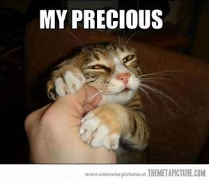 1000+ images about funny cat captions on Pinterest | Cute ...