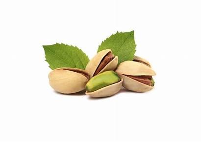 Pistachios Pistacchio Leafs Benefits Health Pistache Nuts
