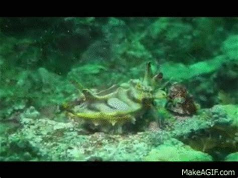 cuttlefish changing color cuttlefish changing color will your mind on make a gif