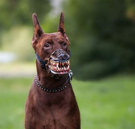 werewolf dog muzzle adjustable  scary teeth dog muzzle zombie  sizes ebay dog muzzle