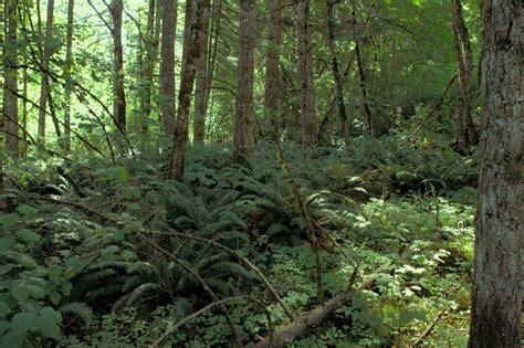 Landon Noll's Pictures of Nolls Oregon Home