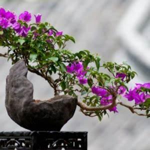 gartendeko selber machen 50 lustige ideen archzinenet With whirlpool garten mit bonsai 50 years old