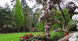Immergrüne Sträucher Sonniger Standort : die sch nsten rhododendron g rten deutschlands mein sch ner garten ~ Orissabook.com Haus und Dekorationen