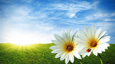 Summer Flowers Wallpapers Free