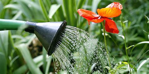 Garten Pflanzen Ohne Gießen by Blumen Gie 223 En Den Garten Richtig Bew 228 Ssern