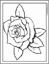Rose Coloring Kindergarten Printable Pdf Printables Colorwithfuzzy sketch template