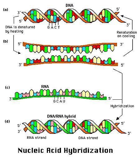acid nucleic  symptoms treatment acid nucleic