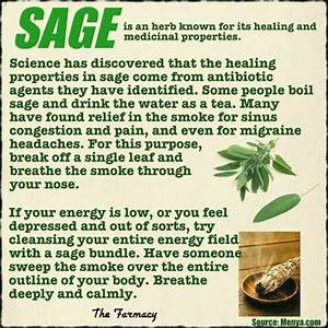 Herb Profile: Sage - Homestead & Survival