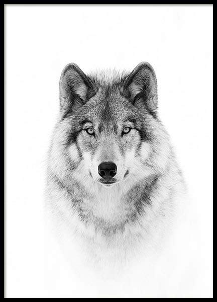 Bild Als Poster by Wolf Poster