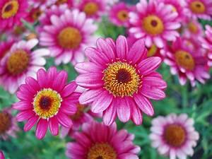 Schöne Bilder Kaufen : sch ne blumen foto bild pflanzen pilze flechten bl ten kleinpflanzen gartenpflanzen ~ Orissabook.com Haus und Dekorationen