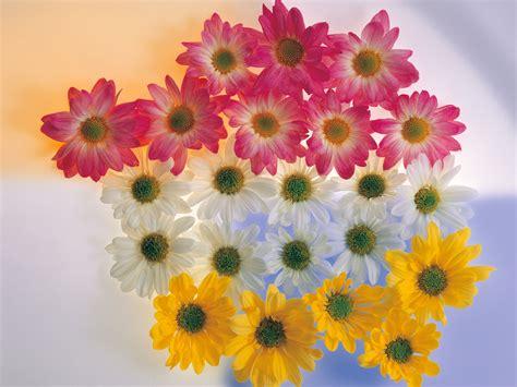 Flowers Wallpapers Hd Desktop