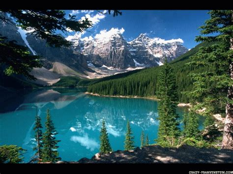 Beautiful Forest Wallpaper  Free Images At Clkercom
