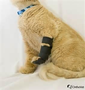 shop for orthovet feline front leg splint orthovet