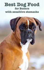 best dog food for boxers with sensitive stomachs With best dog food for boxers