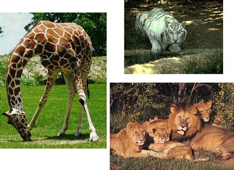 pz  animales salvajes