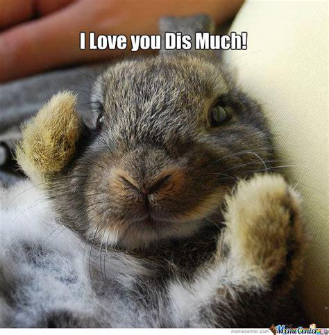 Bunny Meme - bunny meme google search crazy bunny lady pinterest bunny meme bunny and meme