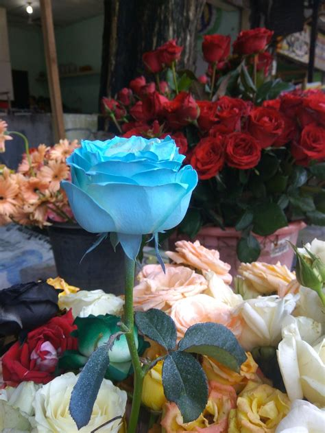 keren  bunga mawar hitam  biru gambar bunga