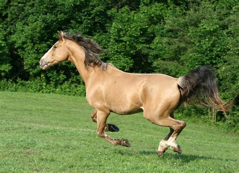 horses adaptation organisms farm4 flickr strategies multiple most coat winter behavioral htt shed grow thick each spring