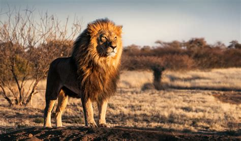 Animals On South African Roads Might Be Big!!
