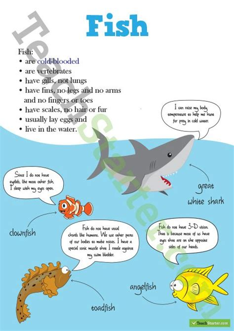 animal classification posters  teaching resource