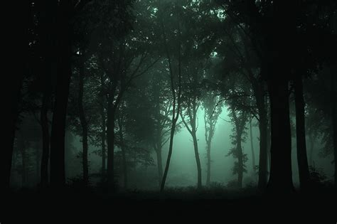 forest night fun