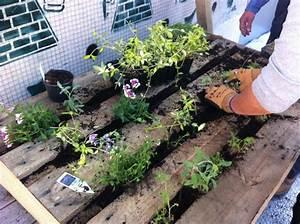 17 best ideas about mur vegetal palette on pinterest With idee de deco jardin exterieur 0 un jardin vertical en palettes joli place