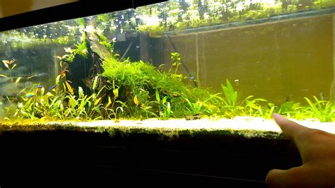 How To Make Aquascape by How To Create Your Own Aquascape