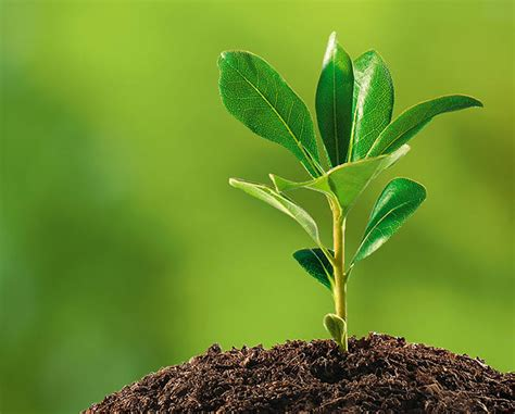 caring for trees caring for small young trees advanced tree shrub care inc