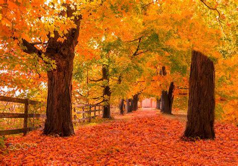 Orange Fall Wallpaper by Windows Xp Fall Wallpaper Gallery