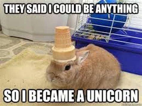 Unicorn Birthday Meme - best 25 unicorn memes ideas on pinterest unicorn birthday cakes unicorn cupcakes cake and