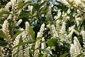 Kirschlorbeer Wann Pflanzen : kartoffeln pflanzen wann ist der beste zeitpunkt ~ Lizthompson.info Haus und Dekorationen