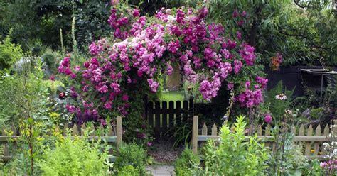Rankende Pflanzen Garten Schatten kletterpflanzen blumen kletterpflanzen
