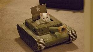 Tank cats caterville for Cats in tanks