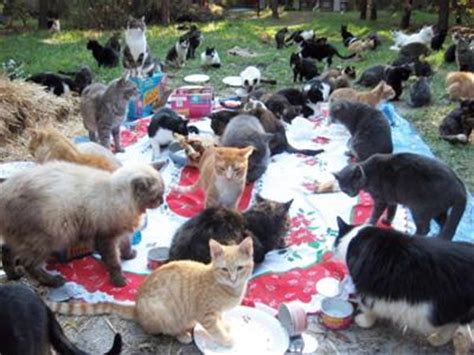 Caboodle Ranch Is Cat Heaven