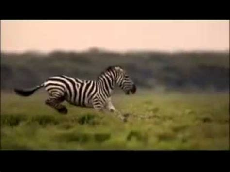 Youtube  Animals National Geographic Channelflv Youtube