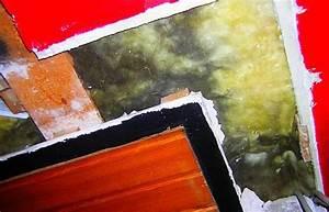 Styropor Dämmung Schimmel : kalziumsilikatplatten d mmstoff schwindel d mmung dach nass schimmel pilz schwarzschimmel befall ~ Whattoseeinmadrid.com Haus und Dekorationen