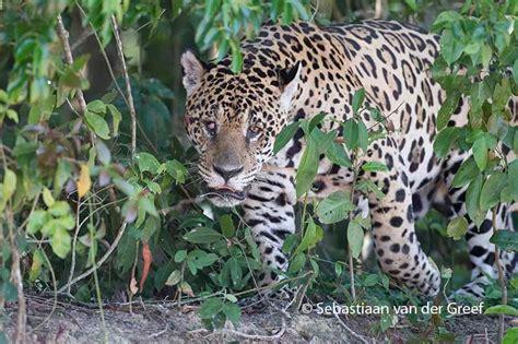 Pantanal Birdwatching Tour
