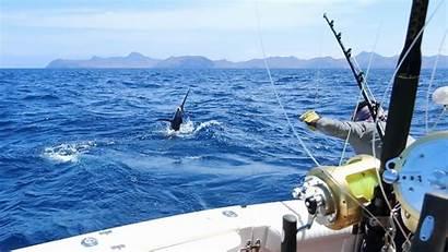 Fishing Deep Sea Fish Sailfish Beach Water