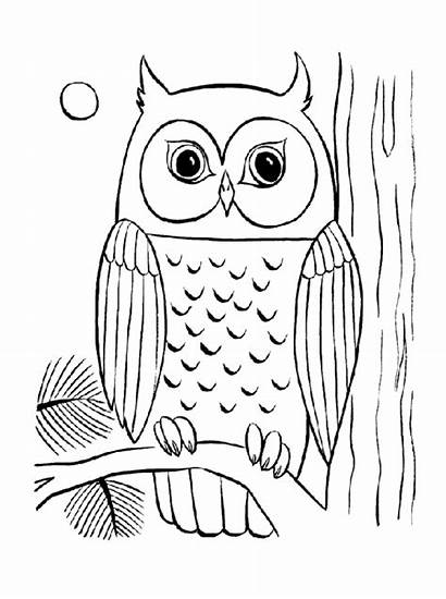 Coloring Owl Pages Adults Sheets Adult Simple