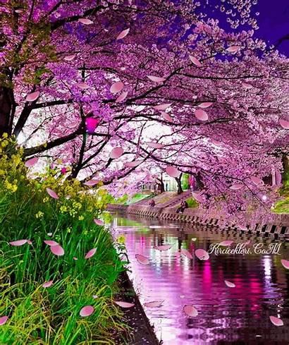 Japan Nature Japanese Spring Gifs Landscape Flower